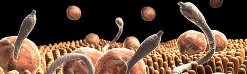 Traitement de Worms