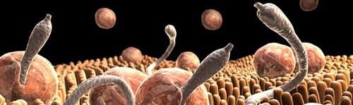 Worms-Behandlung
