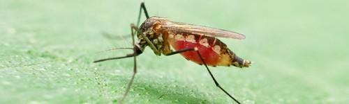 Bodnutí hmyzom